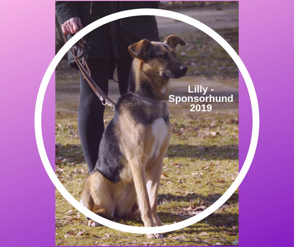 Lilly – Sponsorhund 2019