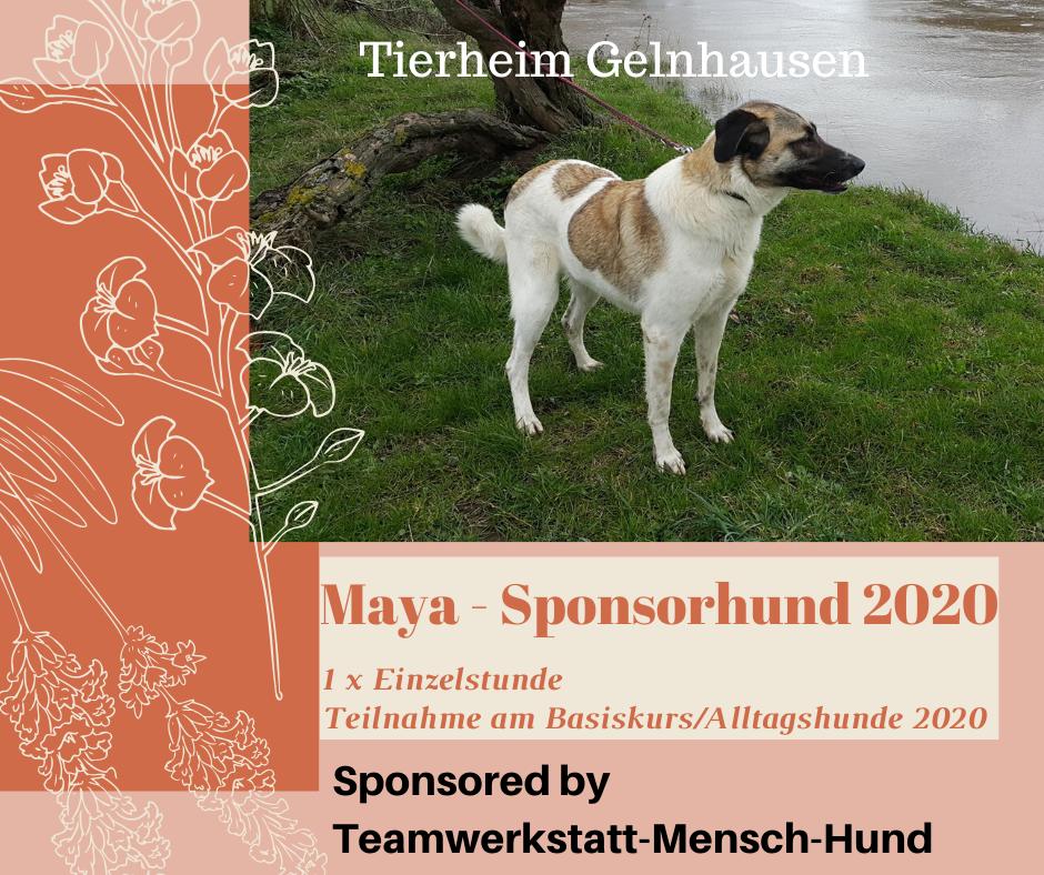 Maya – Tierheimhund wird Sponsorhund 2020